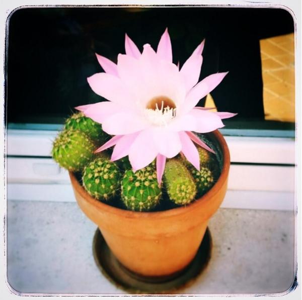 Personas cactus
